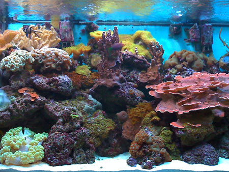 220g Reef closeup